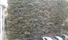 Nevicata di primavera a Civitanova