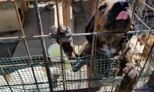 Aiuti agli animali terremotati: dopo Macerata il tour si conclude ad Arquata del Tronto