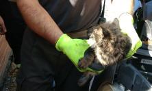 Tolentino, gatto incastrato nel cofano dell'auto: salvato dai vigili del fuoco