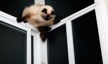 """L'accusa ai vicini: """"Hanno rapito il nostro gatto per cucinarlo"""""""