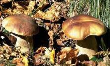 A San Severino prende il via il corso formativo per la raccolta dei funghi Epigei