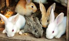 Bandi regionali per tutelare il benessere degli animali