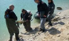 Moria di carpe sul lago di Caccamo: proseguono gli accertamenti dei Carabinieri Forestali