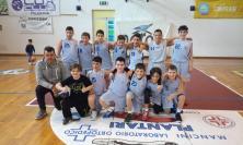 La Picchio Basket di Civitanova vince il campionato esordienti
