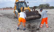 """Civitanova, l'Assessore Cognigni replica all'iniziativa """"Ripuliamo l'Adriatico"""""""