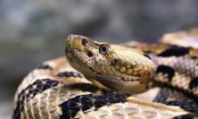 Mistero in autostrada, rinvenuta una teca  vuota: scattano le ricerche del serpente