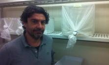Unicam, il professor Guido Favia eletto vice Direttore dell'Italian Malaria Network