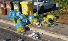 Montecosaro, spazzatura in strada nonostante la festa e gli animali banchettano