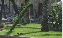 Porto Recanati, due scoiattoli scorrazzano in piazza (VIDEO)