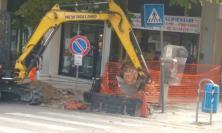"""Macerata, """"Non abbattete i pini!"""": la segnalazione dei residenti di viale Martiri della Libertà"""
