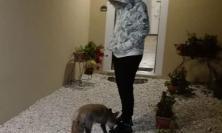 Castelsantangelo sul Nera, incontro ravvicinato con una volpe (FOTO)