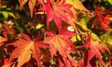 7 cose da fare in autunno a casa