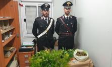 Matelica, in cantina una serra per coltivare marijuana: arrestato 39enne con 1 chilo di droga in casa