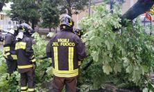 """Maltempo, a Tolentino un albero cade e blocca l'accesso al Punto di Primo Intervento dell'Ospedale """"San Salvatore"""""""