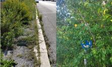 Macerata, la giungla lungo le vie di Piediripa: marciapiedi impraticabili e strade disastrate (VIDEO e FOTO)