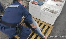 Marche, maxi operazione: sequestrati 662 kg di pesce non tracciabile e multe per 32mila euro