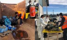 Zero Plastica in Mare, a Civitanova avviato il monitoraggio dei rifiuti recuperati dai pescatori