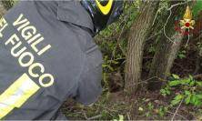 Un lupo preda di un laccio nel bosco: salvato dai Vigili del Fuoco, curato e rimesso in libertà (VIDEO)