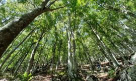 Parco Nazionale dei Sibillini: al via il martelloscopio, un progetto per la gestione delle foreste