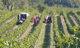 Montecassiano, si ribalta col trattore: agricoltore a Torrette in eliambulanza (VIDEO)
