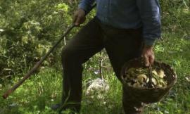 Serravalle, esce per andare a funghi: 73enne trovato morto nel bosco