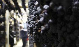 """Domenica la seconda giornata di """"Appassimenti Aperti"""": Serrapetrona celebra la Vernaccia Nera con degustazioni e visite in cantina"""