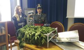 Maxi piantagione di marijuana scoperta dalla Finanza: un arresto - FOTO - VIDEO
