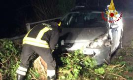 Albero cade su un'auto a Gagliole, il vento fa danni in tutta la provincia