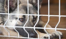 Maltrattamento di animali: ecco come la legge tutela i nostri amici a quattro zampe