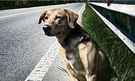 Tutela degli animali, il cane abbandonato ha il microchip: padrone condannato