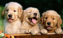 Camerino, il 4 ottobre si rinnova il consiglio direttivo di sezione del Lega Nazionale per la difesa del cane