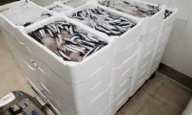 Operazione Know Fish: la Guardia Costiera sequestra 360 kg di alici e 40 di lumache