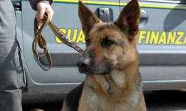 Civitanova, blitz in un casolare, sequestrati 2,9 grammi di droga: un arrestato e due denunciati