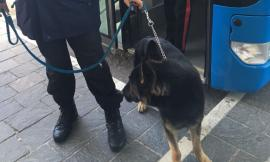 Controlli antidroga a scuola: carabinieri e cani negli istituti