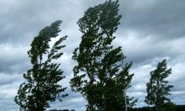 Ripe San Ginesio, cade un albero lungo la provinciale 78