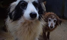 Cs Argo: s.o.s freddo per i cani del canile di Macerata