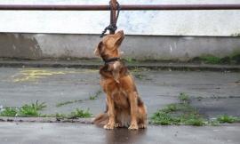 Ha abbandonato il proprio cane: padrone condannato
