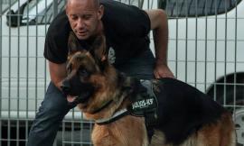 A Treia i cani da ricerca con l'istruttore internazionale Ivan Schmidt (FOTO)