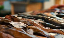 """Mercato Ittico del Pesce, Ciarapica: """"il confronto fra la vecchia asta del pesce e la nuova fa ben sperare"""""""