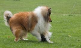 """Maltrattamento di animali: è punibile chi per """"motivi correttivi"""" colpisce un cagnolino con dei calci"""