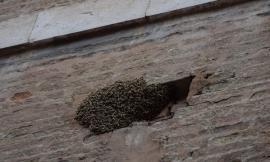 Macerata, sciame di api in Corso della Repubblica: pronto intervento dei Vigili del Fuoco (FOTO E VIDEO)