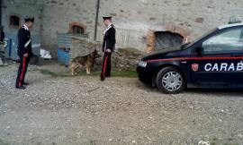 Montefano, incendio in un capanno: animali salvati dai carabinieri