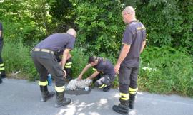 Montecassiano, salvo il cagnolino scampato all'incidente