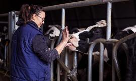 """""""Alleva la speranza"""": iniziata la fase due della campagna per sostenere gli allevatori"""