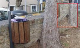 """Recanati, Simonacci e il ratto fotografato al Parco dei Torrioni: """"Disagio e degrado diffusi"""""""
