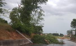 Il maltempo flagella la provincia di Macerata: trombe d'aria e piante in mezzo alla strada (FOTO)