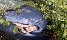 Quercia cade sopra a una vettura, miracolato il conducente (FOTO)