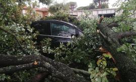 Porto Recanati, auto seppellita dai rami: conducente miracolosamente illeso (FOTO)