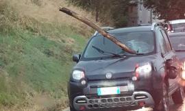 Ramo sfonda il parabrezza di una Fiat Panda: miracolata la conducente