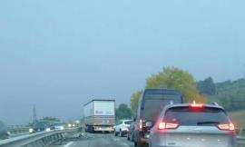 Spunta una pecora in superstrada: le auto la schivano per un pelo. Disagi alla viabilità